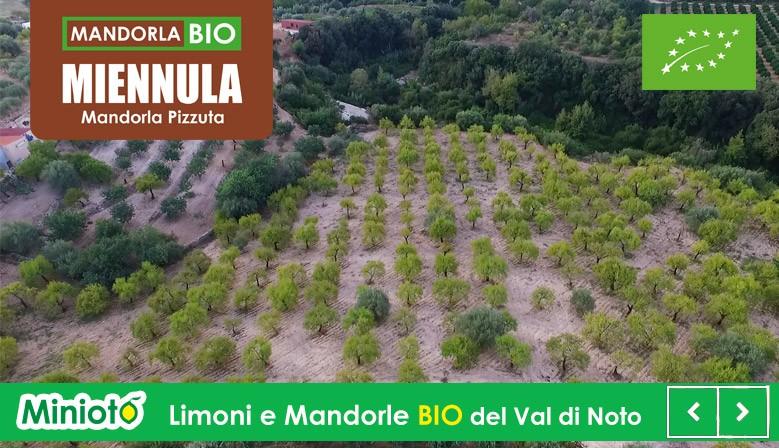 Mandorla Pizzuta d'Avola Bio Val di Noto - Mandorle di Sicilia